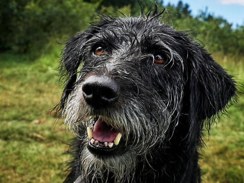 Guenther-Zipfelmayer-Dogs-more-006.jpg