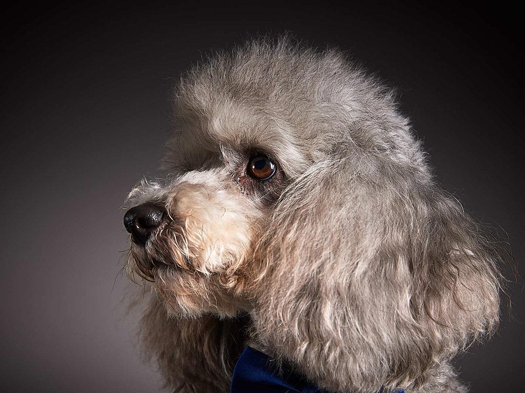 Guenther-Zipfelmayer-Dogs-more-013.jpg