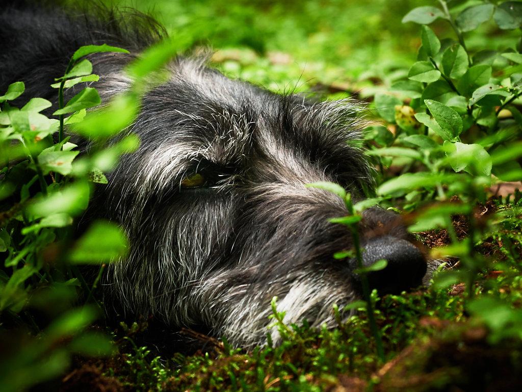Guenther-Zipfelmayer-Dogs-more-007.jpg