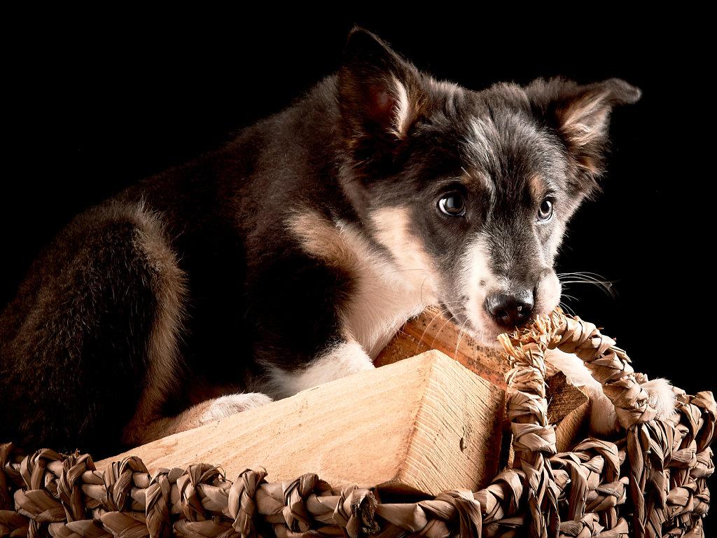 Guenther-Zipfelmayer-Dogs-more-004.jpg