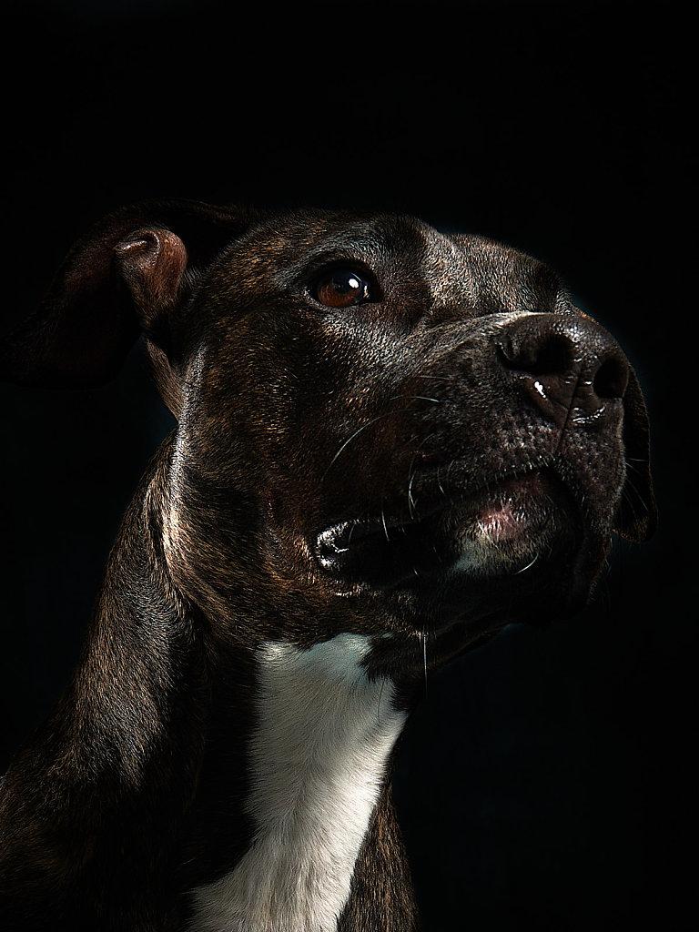 Guenther-Zipfelmayer-Dogs-more-010.jpg