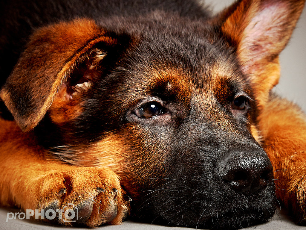Guenther-Zipfelmayer-Dogs-more-015.jpg