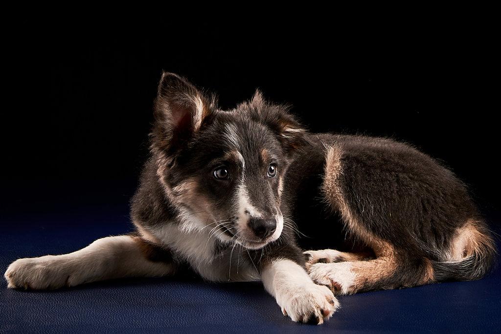 Guenther-Zipfelmayer-Dogs-more-016.jpg