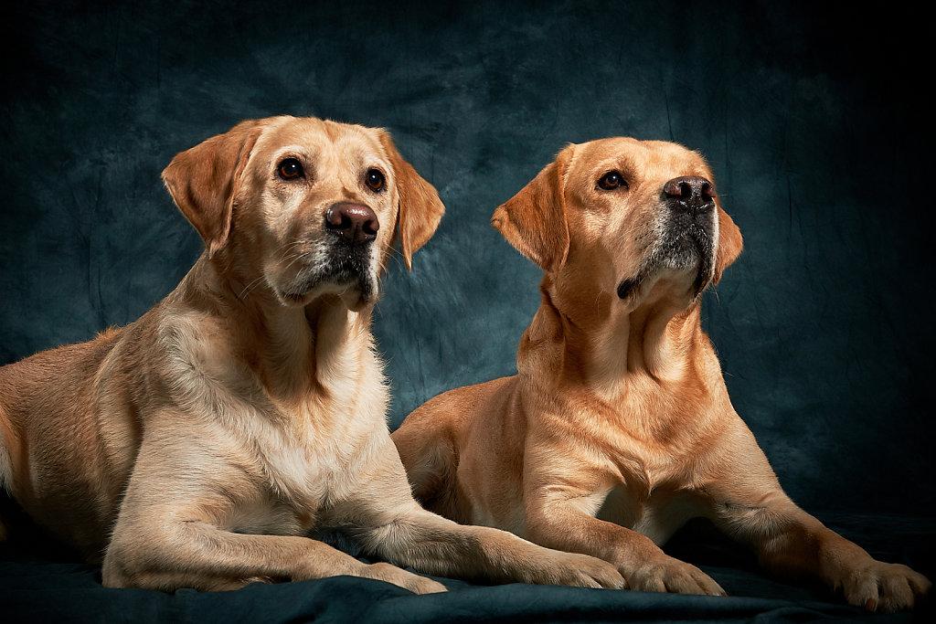 Guenther-Zipfelmayer-Dogs-more-002.jpg
