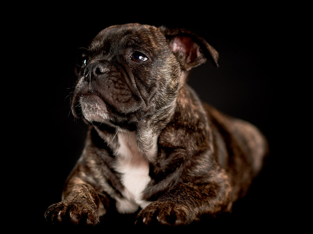 Guenther-Zipfelmayer-Dogs-more-027.jpg
