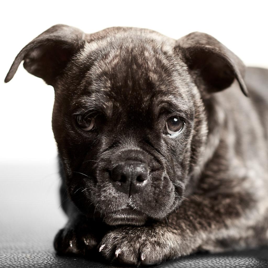 Guenther-Zipfelmayer-Dogs-more-033.jpg