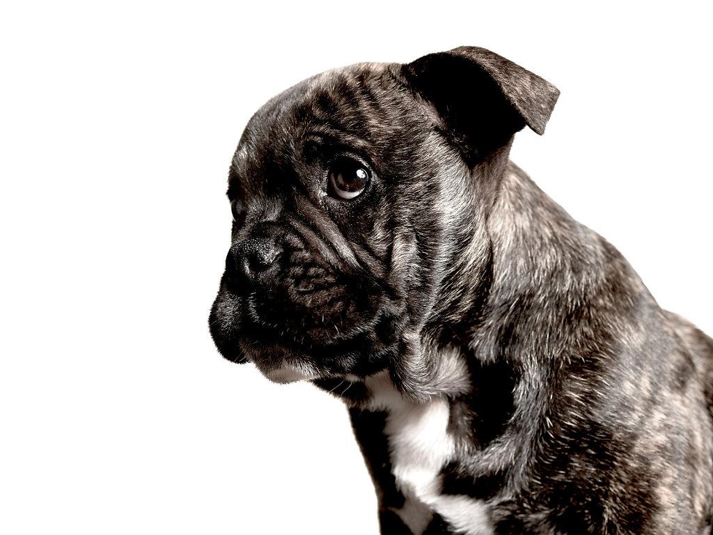 Guenther-Zipfelmayer-Dogs-more-032.jpg