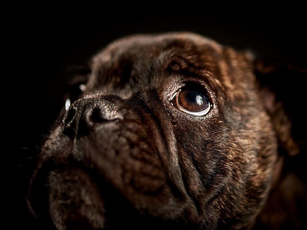 Guenther-Zipfelmayer-Dogs-more-026.jpg