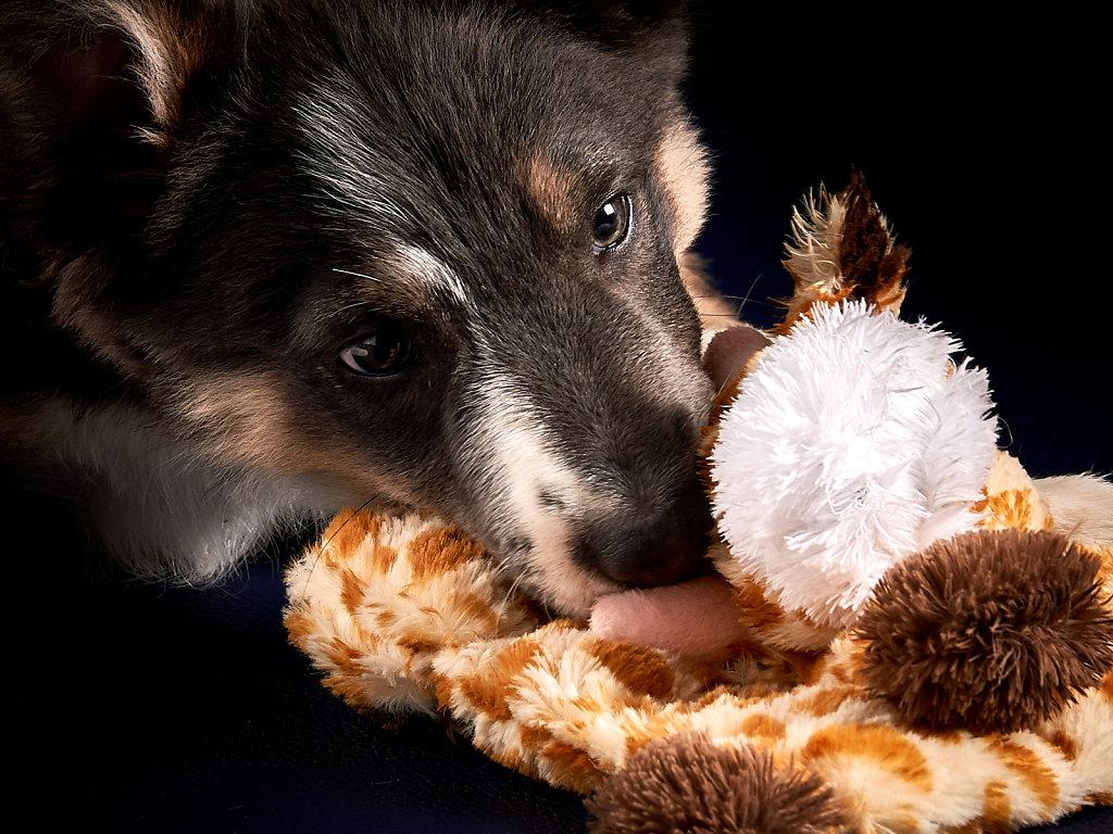 Guenther-Zipfelmayer-Dogs-more-018.jpg