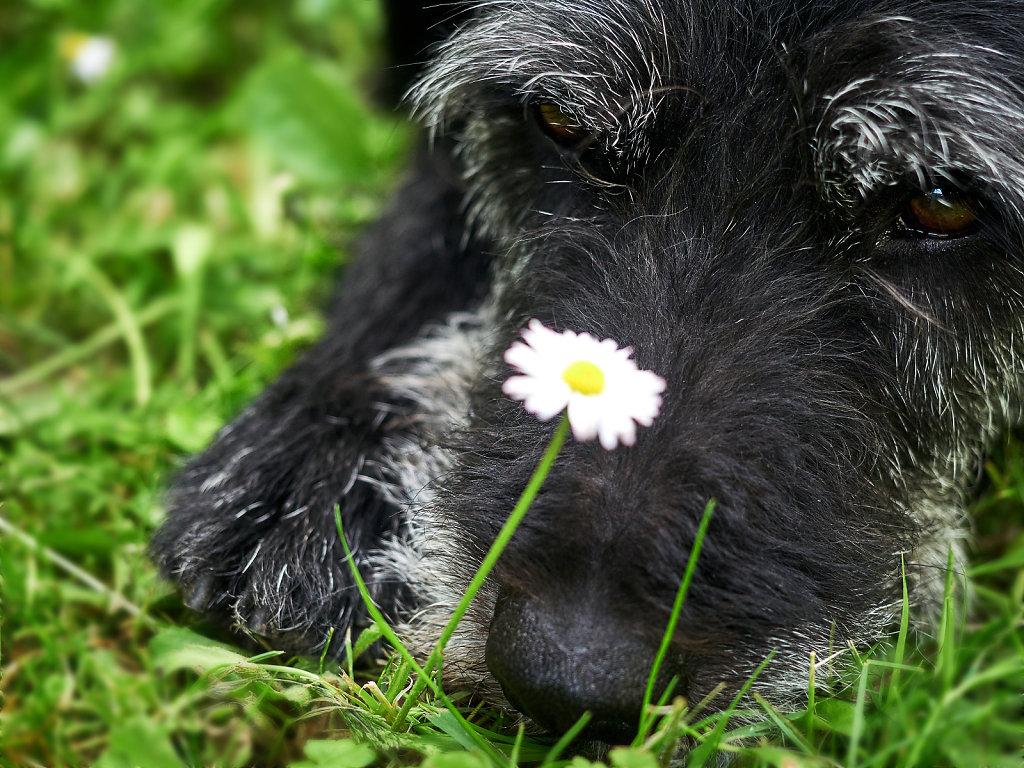 Guenther-Zipfelmayer-Dogs-more-008.jpg
